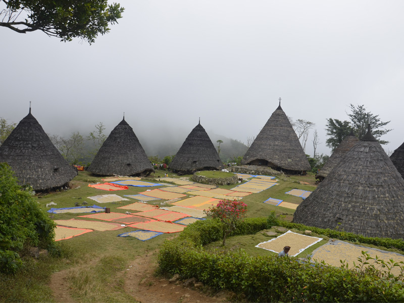 See all wae rebo trekking and home-stay options